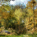 Softly Falling Leaves by Kristin Elmquist