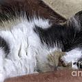 Softly Sleeping by Lynn Palmer
