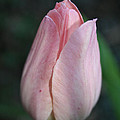 Softly by Susan Herber