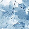 Softness Of Blue Leaves by Jennie Marie Schell