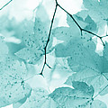 Softness Of Teal Maple Leaves by Jennie Marie Schell