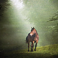 Solitary Horse by Christiana Stawski