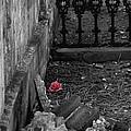 Solitary Rose by Renee Barnes