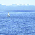 Solitary Sailing On Lake Tahoe by Frank Wilson