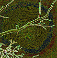 Songbird Green by First Star Art