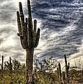 Sonoran Desert Iv by Saija  Lehtonen