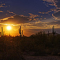 Sonoran Sunset  by Saija  Lehtonen
