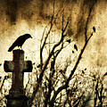Soulful Crow by Gothicrow Images