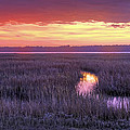South Carolina Tidal Marshes by Phill Doherty