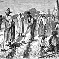 South: Cotton Planting by Granger