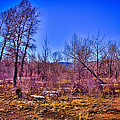 South Platte Park Landscape by David Patterson