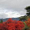 Southern California Fall by Pamela Muzyka