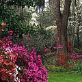 Southern Garden - Fs000148 by Daniel Dempster