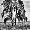 Southern In Black And White by JC Findley