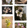 Southwest Wildflower Collection #2 by Judee Stalmack