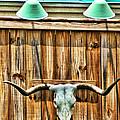 Southwestern Longhorn Skull by Kathy Clark