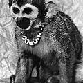 Space Monkey: Baker, 1979 by Granger