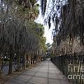 Spanish Moss Sidewalk by Tim Mulina