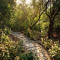 Sparkling Dawn On A Woodland Path by Jennifer Holcombe