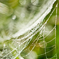 Sparkling Web by © copyright 2011 Sharleen Chao