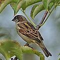Sparrow I by Joe Faherty