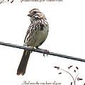 Sparrow by Lena Auxier