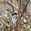 Sparrow by Lennie Malvone