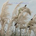 Sparrows In Breeze by Sonali Gangane