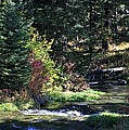 Spearfish Canyon by Donald J Gray