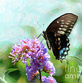 Spicebrook Swallowtail Ds by Edward Sobuta