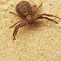 Spider by David Aubrey