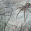 Spider Descending by Mother Nature