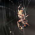 Spider by Ericamaxine Price