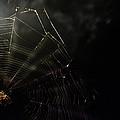 Spider by La Dolce Vita