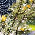 Spider On Web by Craig Tuttle