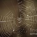 Spider Web 1.0 by Yhun Suarez