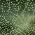 Spider Web by Adrian Bicker