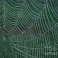 Spider Web With Dew Drops by Chad and Stacey Hall