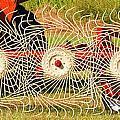 Spindizzy1233 by Guy Whiteley