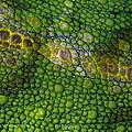 Spiny Desert Rhinoceros Chameleon by Ingo Arndt