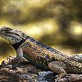 Spiny Lizard by Saija  Lehtonen