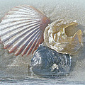 Spirit Of The Sea - Seashells And Surf by Mother Nature