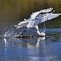 Splash Fishing  by Bill Dodsworth