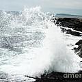 Splash by Rainey Daze