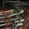 Split Rail Fence by LeeAnn McLaneGoetz McLaneGoetzStudioLLCcom