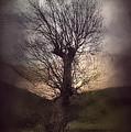 Spook-tree by Svetlana Sewell