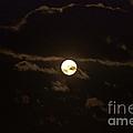 Spooky Night by Cheryl Baxter