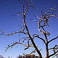 Spooky Tree by Larry Ricker