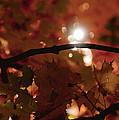 Spotlight On Fall by Cheryl Baxter