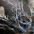 Spotted Owl In Tree by John Garland  Tyson